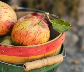 It's apple season! What…