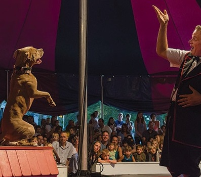 Why One Circus Replaced Poodles with Pit Bulls